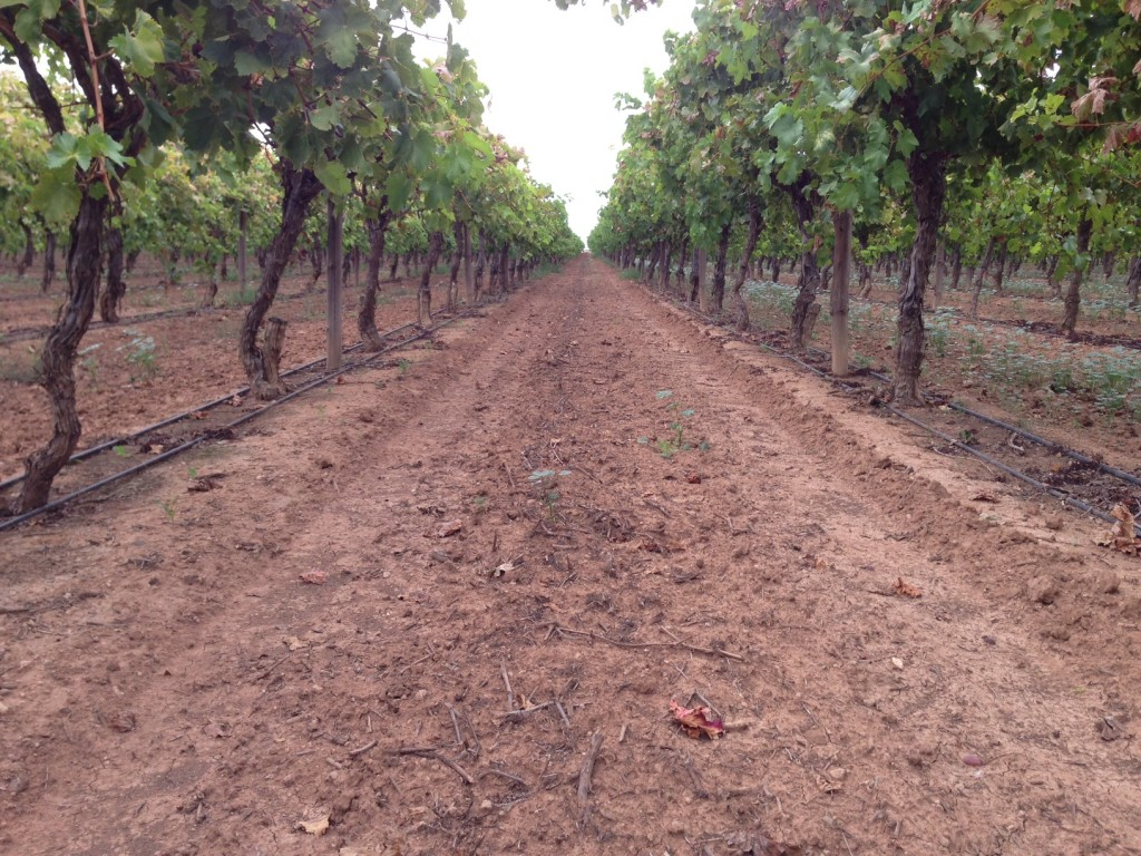 Irrigation Vine