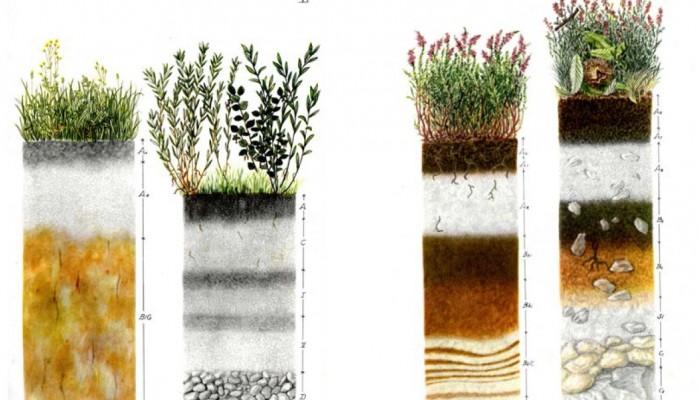 Soil-profiles-700x400