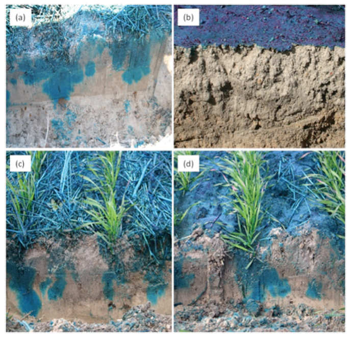 p07_soils jpg
